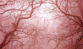 scary-trees