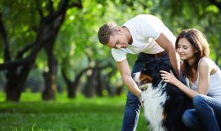 dog walking_61391779